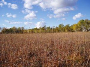 Manitoba's Tallgrass Prairie Preserve Photo by M.Kowalchuk.